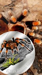 """серебряная монета """"Мексиканский красноколенный паук-птицеед"""""""