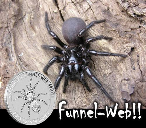 Bullion Spider Silver Coin